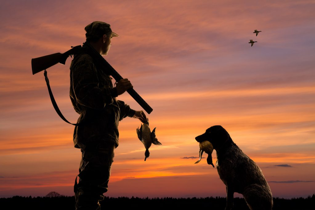 gun dog hunting dog